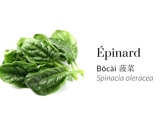 Épinard - Bōcài - Spinacia oleracea
